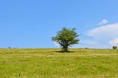与偏僻的树的狂放的风景 免版税库存照片