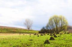 与偏僻的树的黑暗的春天领域对此 免版税库存照片