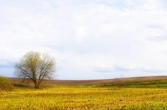 与偏僻的树的黑暗的春天领域对此 免版税图库摄影