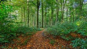 与充满活力的叶子的秋季森林场面 免版税图库摄影