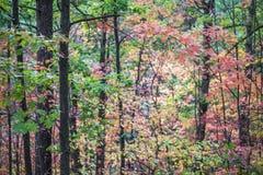 与充满活力的秋天的黑暗的垂直的树干上色了叶子filli 图库摄影