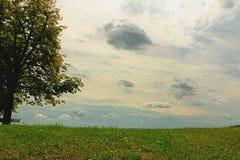 与充满活力的草和一棵巨大的绿色树的多云天空 免版税库存图片