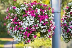与充满活力的花的大垂悬的篮子 库存图片