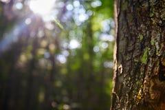与光亮的太阳的树 免版税库存图片