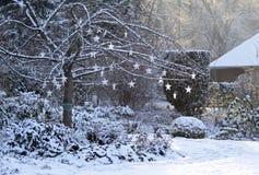 与光亮的星的树在多雪的庭院里 免版税库存照片