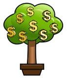 与光亮的美元的金钱树 免版税库存照片