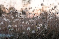 与光杂草和魔术的背景在微明的在秋天 日落 免版税库存照片