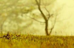 与光杂草和魔术的背景在秋天第4部分的黎明 库存照片