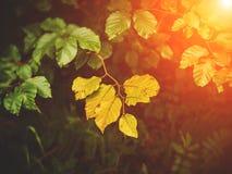 与光束的秋叶 免版税库存照片