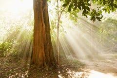 与光柱的树 免版税库存照片