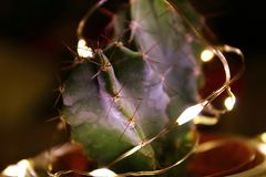 与光的一个小仙人掌 免版税库存照片