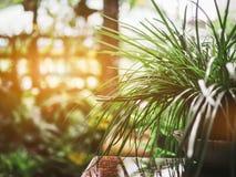 与光的一点树 免版税库存图片