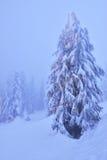 与光的圣诞树在多雪的山森林里 图库摄影