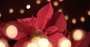 与光的圣诞节花 免版税图库摄影
