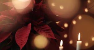 与光的圣诞节花 库存图片