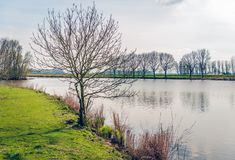 与光秃的分支的树在湖边缘 免版税图库摄影