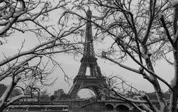 与光秃的树在冬天,巴黎,法国的黑白埃佛尔铁塔 免版税库存照片