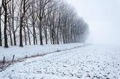 与光秃的树行的梦想的冬天风景  免版税库存图片