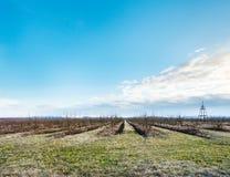 与光秃的苹果树的春天风景在果树园 免版税库存图片