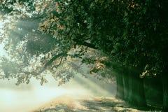 与光芒的日出在一条有雾的神奇道路的背景我 免版税库存图片