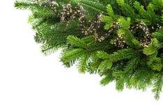 与光装饰的新鲜的云杉的小树枝 库存图片