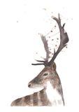 与光诗歌选的水彩鹿  免版税库存图片