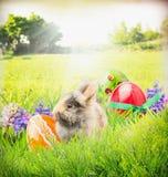 与兔宝宝、颜色鸡蛋和花的复活节卡片在庭院草 免版税库存图片