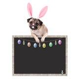 与兔宝宝垂悬与在空白的黑板标志的爪子的耳朵王冠的逗人喜爱的哈巴狗小狗,与复活节装饰,在白色背景 库存图片