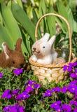 与兔宝宝的复活节篮子 库存照片