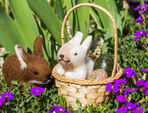 与兔宝宝的复活节篮子 库存图片