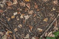 与全部早午餐和干燥叶子背景的森林地面土壤 图库摄影