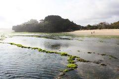 与全部的海滩绿色海草 免版税库存照片
