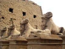 与公羊的头的狮身人面象雕象 库存图片