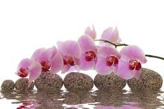 与兰花和水反射的按摩石头 免版税库存图片