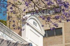 与兰花楹属植物树枝的艺术装饰大厦在前景 免版税库存照片