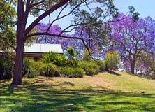 与兰花楹属植物树的Parkland 免版税图库摄影