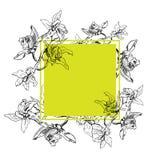 与兰花的热带长方形方形的框架,着墨在白色背景,传染媒介例证的手拉的花 向量例证
