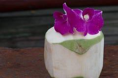 与兰花的绿色椰子 免版税图库摄影