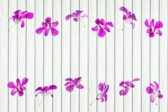 与兰花装饰的白色木背景 库存照片