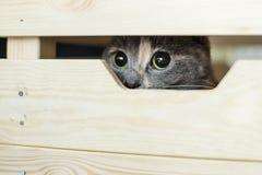 与兴趣的一只相当三色猫为photographe暗中侦察 免版税库存图片