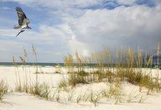 与其抓住的一次白鹭的羽毛飞行在海滩 库存图片