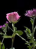 与其他花的桃红色玫瑰 免版税库存照片