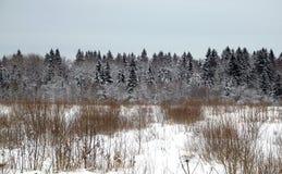 与具球果森林的冬天风景在一个积雪的领域后在反对灰色多云天空的一个冷的冬日 图库摄影