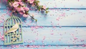 与典雅的桃红色花的背景在蓝色木板条 免版税图库摄影