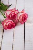 与典雅的花的明信片和您的文本的空的地方 免版税库存图片