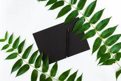 与写生簿的自然在白色桌上的构成和铅笔,装饰用绿色分支 平的位置,顶视图,看法 图库摄影