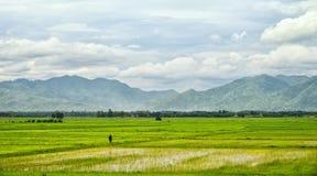 与农夫和山的米领域 库存图片
