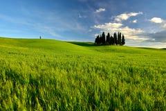 与农夫房子的托斯卡纳著名柏树一朵晴天和白色云彩 免版税库存图片