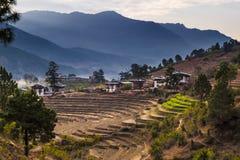 与农村房子的露台的米领域在不丹 不丹是一个小国家在西藏自治区之间的喜马拉雅山  免版税库存图片