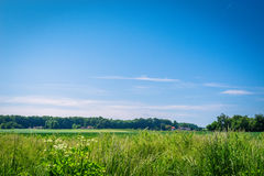 与农村领域的夏天风景 库存照片